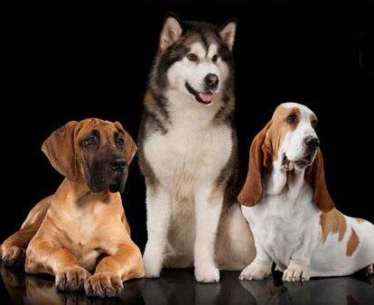 buono sconto 5 euro prodotti per cani