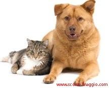 campioni gratuiti di cibo per cani e gatti husse