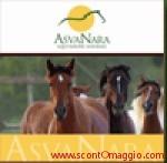 dvd omaggio cavalli