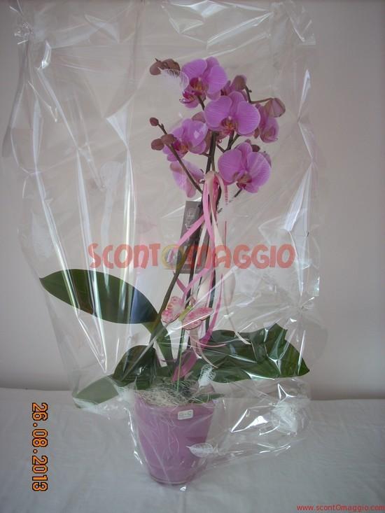 Orchidea gratis ricevuta con palmolive scopri un mondo di - Come curare un orchidea in casa ...