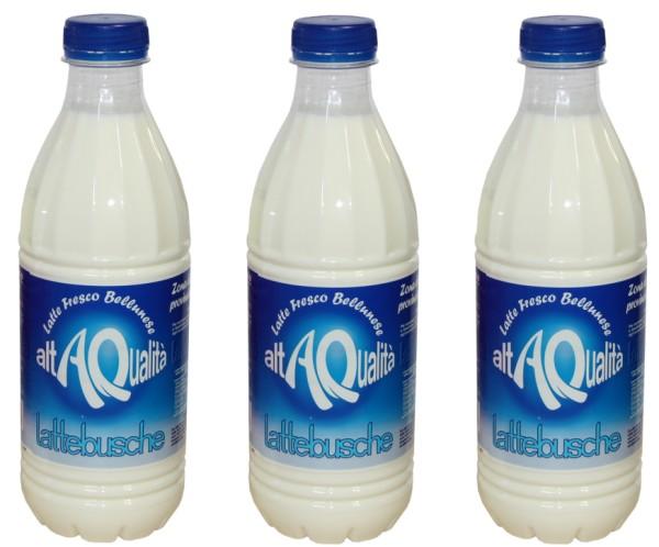 lattebusche latte