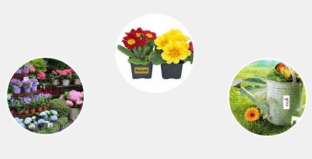 etichette piante fiori