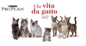 che vita da gatto sei