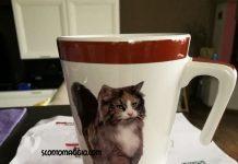 tazza gatto purina