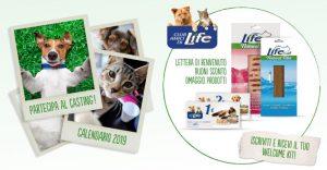 life calendario